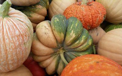Pumpkins: A Harvest of Nutrients
