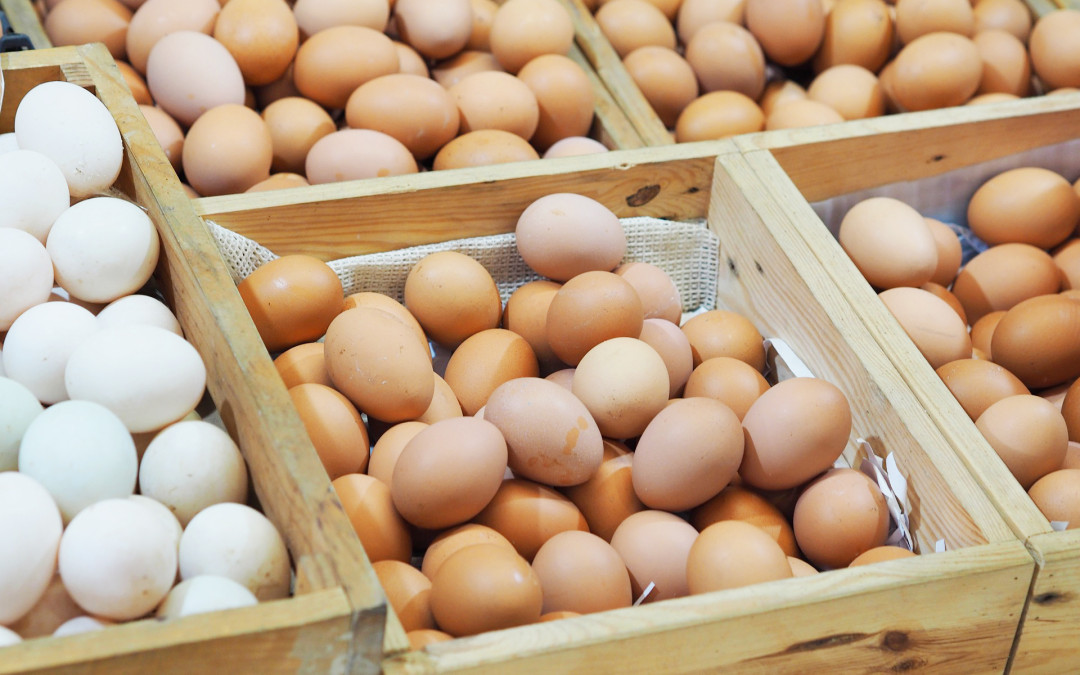 Food Facts: The Free-Range Egg