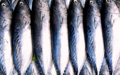 GMO Salmon May Be Coming To Your Local Supermarket!