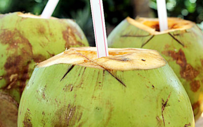 Coconut Water – They Aren't All the Same